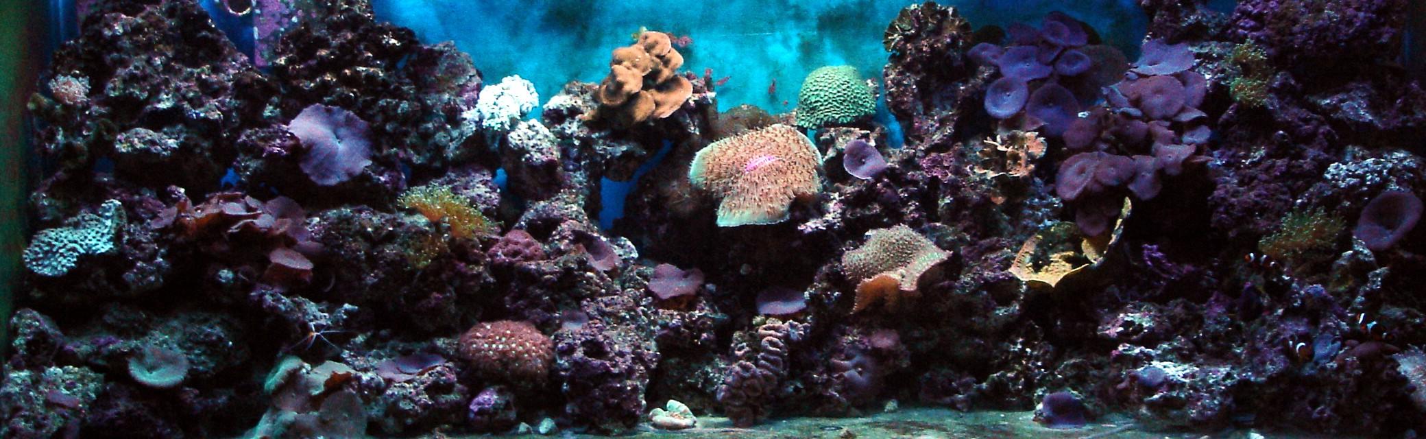 Reef Aquarium Design : .com Reef aquarium Lehigh Valley aquarium maintenance, design ...